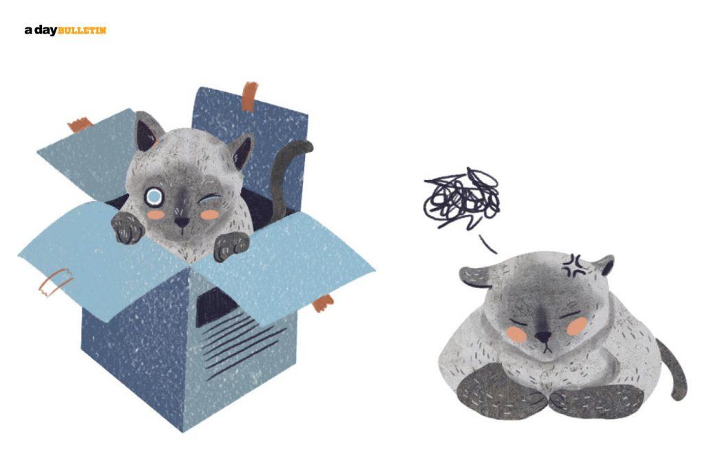 แมวกล่อง
