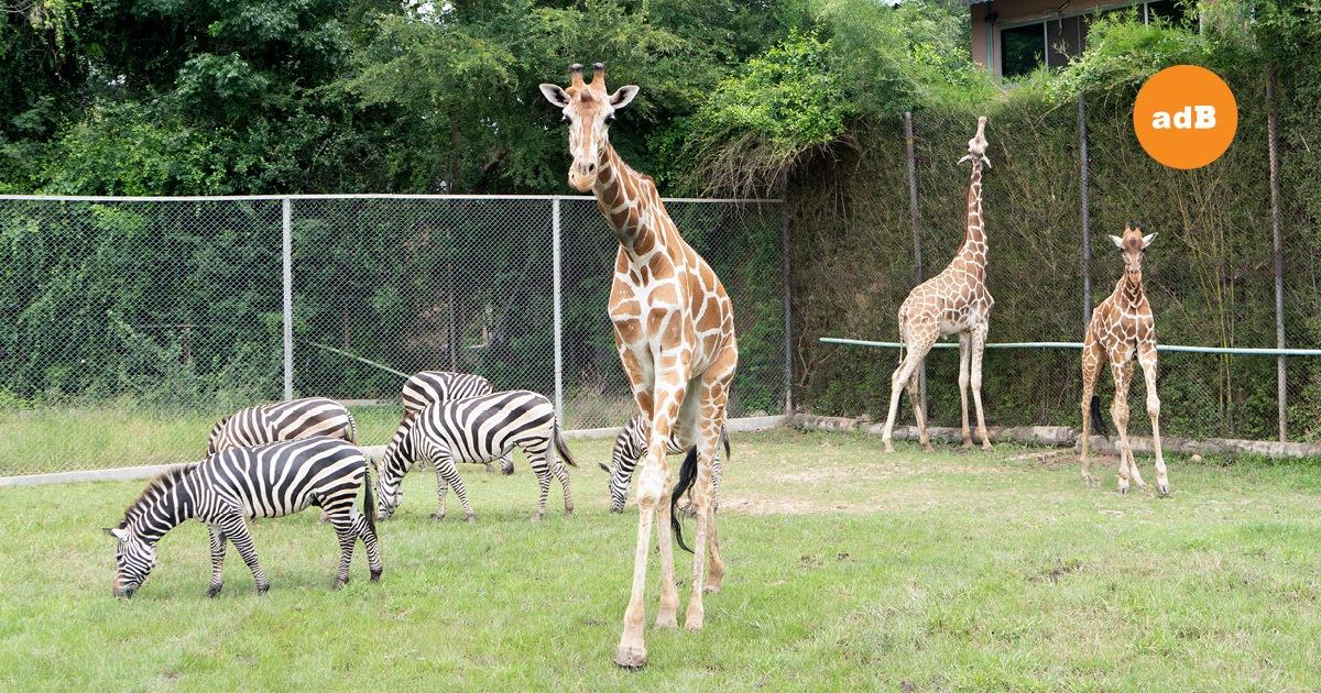 สวนสัตว์เปิด