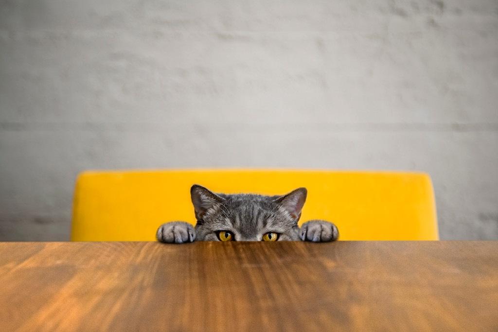 ทาสแมว
