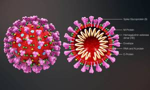 COVID-19: Coronavirus is Replicating in a Peculiar way, Scientist Knows How