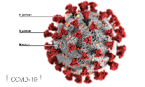 A Possible Candidate to Inhibit SARS-CoV-2 Have Been Identified