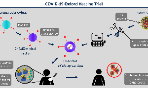 Phase II/III of COVID-19 Vaccine is About to Begin at Oxford COVID-19 Vaccine Centre