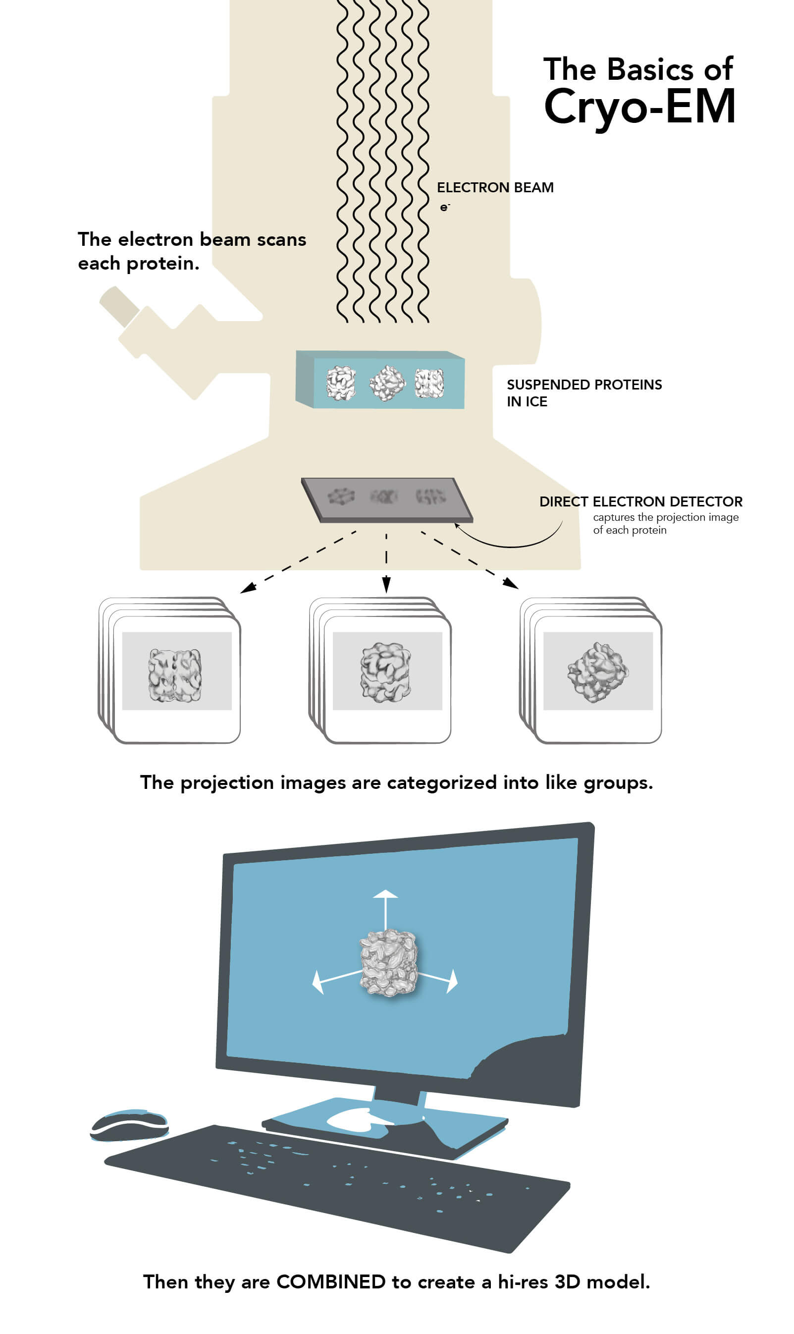 Image: This infographic explains the basics of cryo-EM.