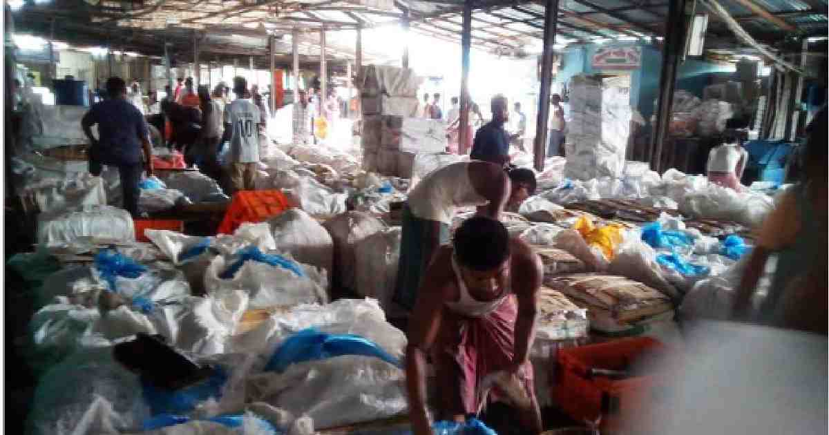 Hilsa to be tastier this year as lockdown cleans up rivers: Expert