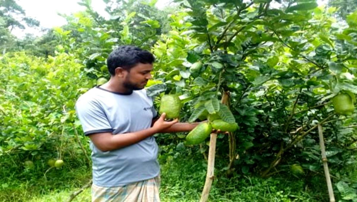 Sylhet farmers upbeat about Jara Lemon farming amid growing export