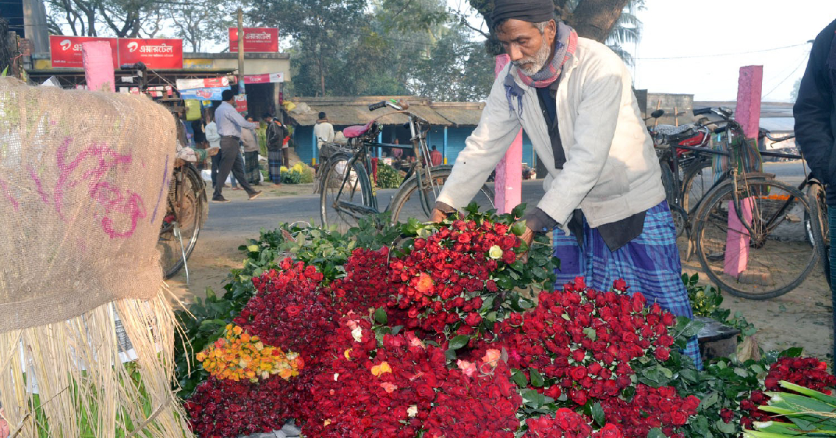 Flower cultivation in Jashore ,  Godkhali ,  flower market ,  Pahela Falgun ,  Valentine's Day