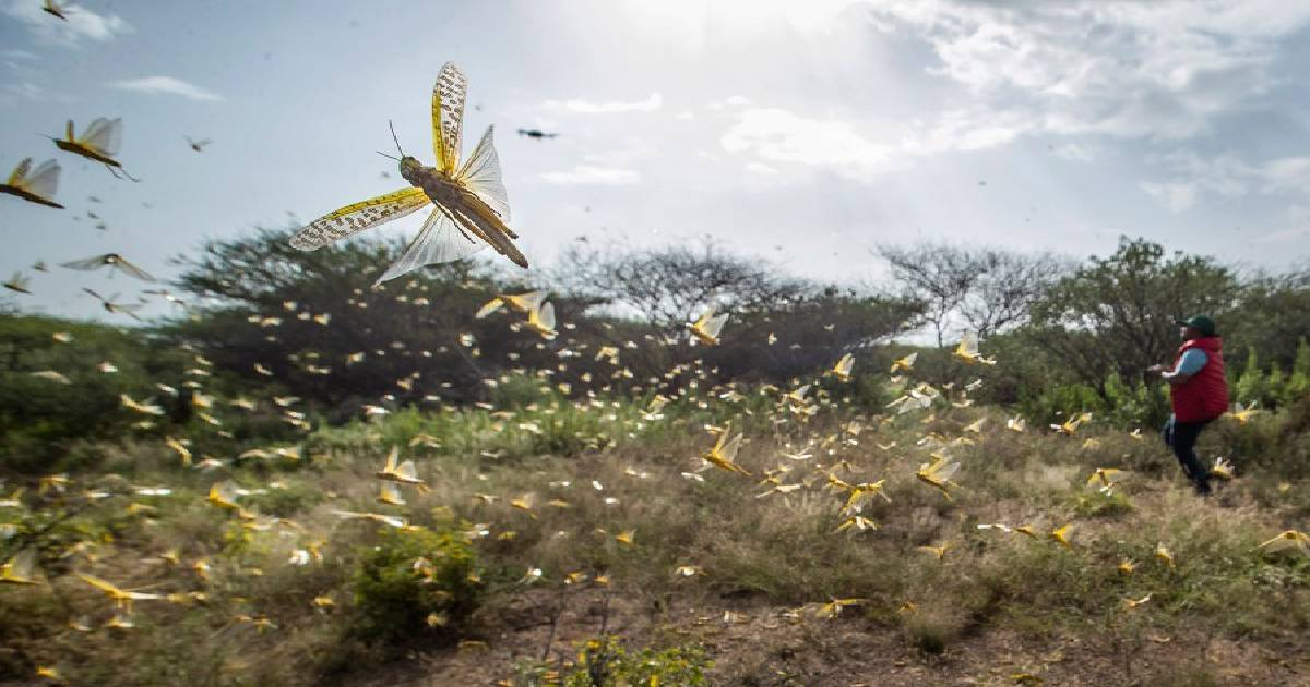 Spray planes combat the huge locust outbreak in East Africa