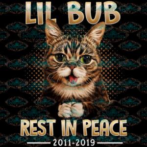 Lil bub, rest in peace, cat, cat lover, peaceful, pray, cute cat, png