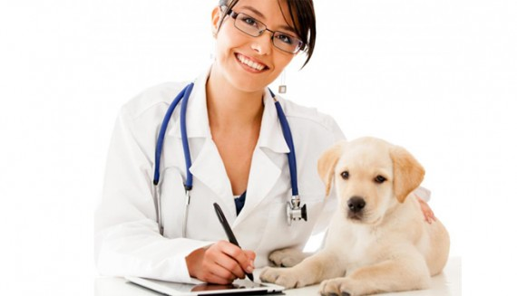 how-much-a-veterinarian-make-per-month-1.jpg