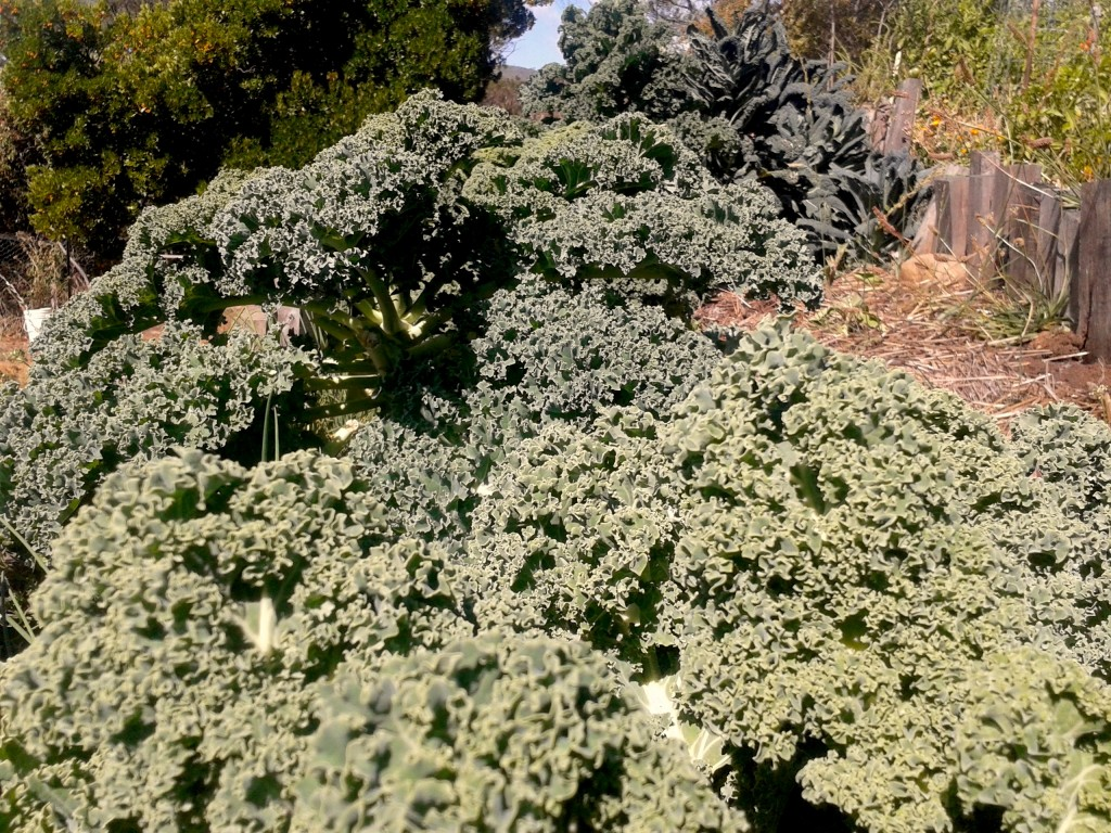 Kale forest