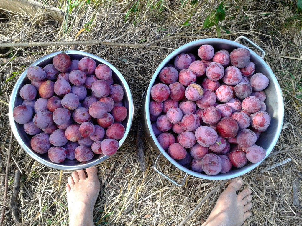 plums and feet