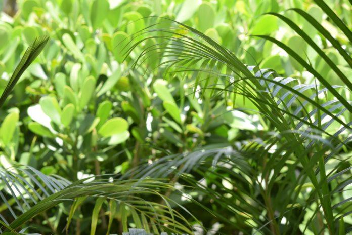 Indonesia kaya hiperakumulator untuk bersihkan lingkungan