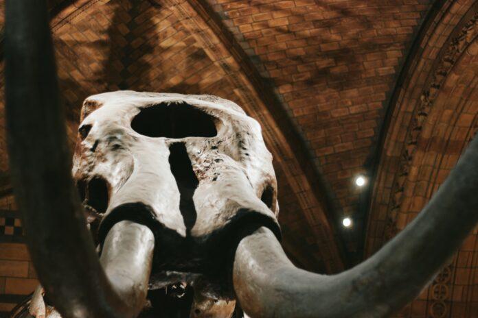 Fosil mammoth ditemukan di tepi danau semenanjung Yamal, Siberia