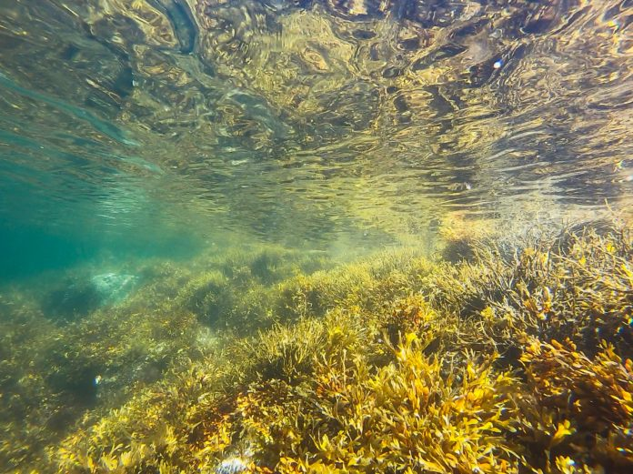 Indonesian seagrass beds in poor state: Scientists