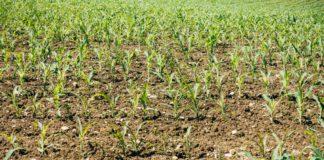 Indonesian fertilizer gets U.S. patent rights