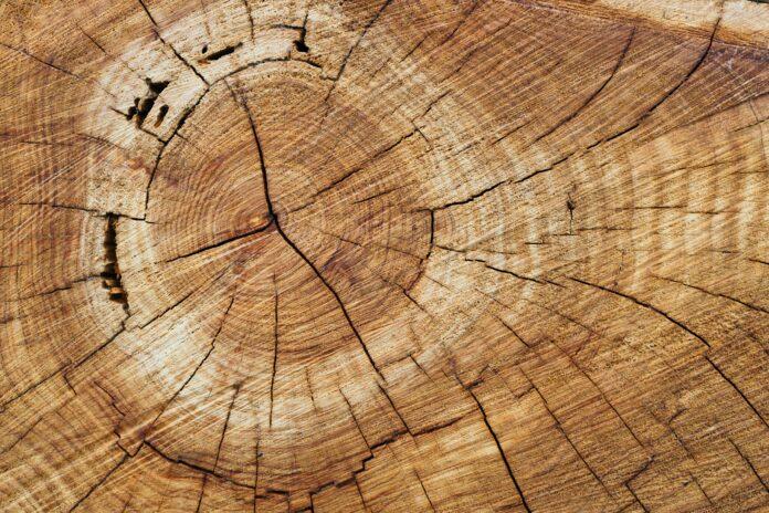 Belgia sambut baik ekspor produk kayu legal-berkelanjutan dari Indonesia