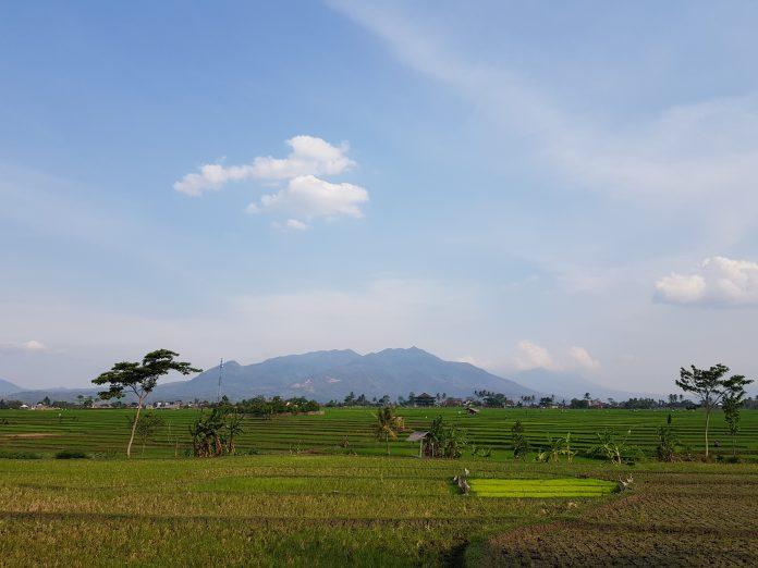 """""""Food estate"""" padi di Kalteng mencakup 32 ribu hektare"""