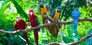 Hewan vertebrata adalah hewan yang memiliki tulang belakang. Klasifikasinya ada pisces, amfibi, reptil, aves, dan mamalia.