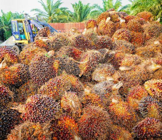Indonesia tekankan sertifikasi sawit berkelanjutan jamin legalitas produk