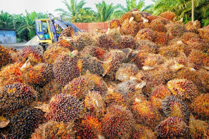 Indonesia underscores palm oil certification to guarantee product legality
