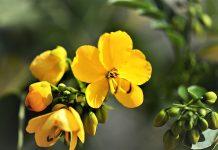 Kebun Raya di Qatar koleksi tanaman dalam Al-Qur'an dan hadits