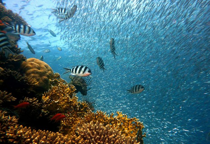 Indonesia launches largest coral reef restoration program