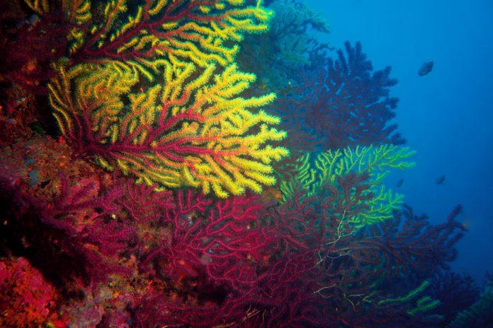 Perubahan iklim hancurkan setengah terumbu karang raksasa Australia