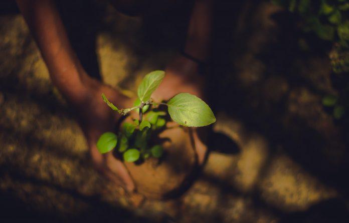 Arab Saudi tanam 10 juta pohon hingga April 2021