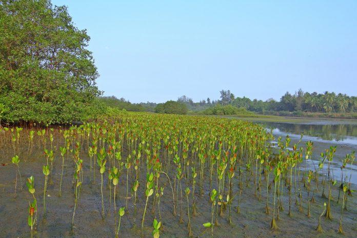 600 ribu hektar kawasan mangrove akan direstorasi