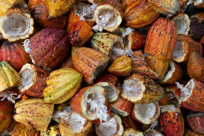 Ekspor produk kakao 549 juta dolar AS selama Januari-Juni 2020