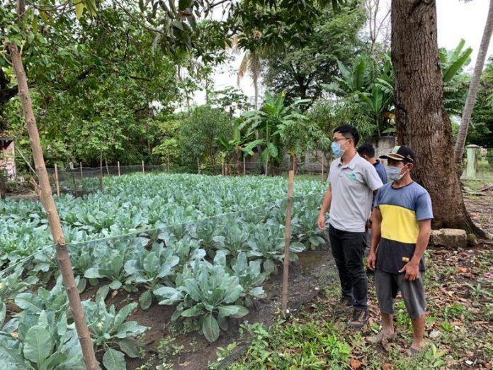 Misi pertanian Taiwan jadikan Karawang lahan hortikultura produktif