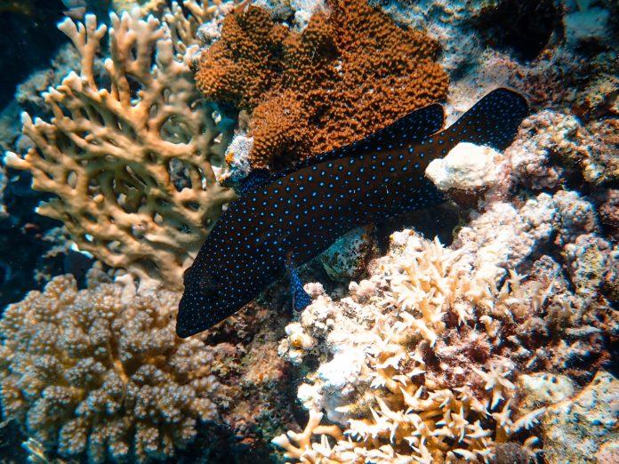 Indonesia pulihkan 50 hektar terumbu karang untuk wisata Bali
