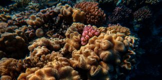 Indonesia restores 50 hectares of coral reefs in Bali