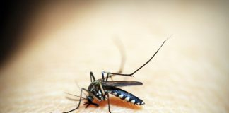WHO certifies 10 countries as malaria-free