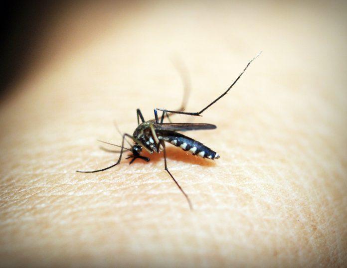Upaya global lawan malaria terancam pandemik dan dana