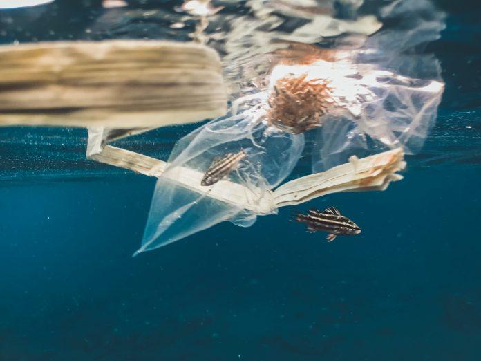 Warga Taiwan makan plastik setara satu sedotan per tahun lewat 'seafood'