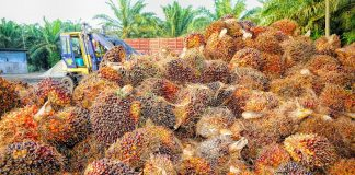 Indonesia-Netherlands expand cooperation on sustainable palm oil for SDGs