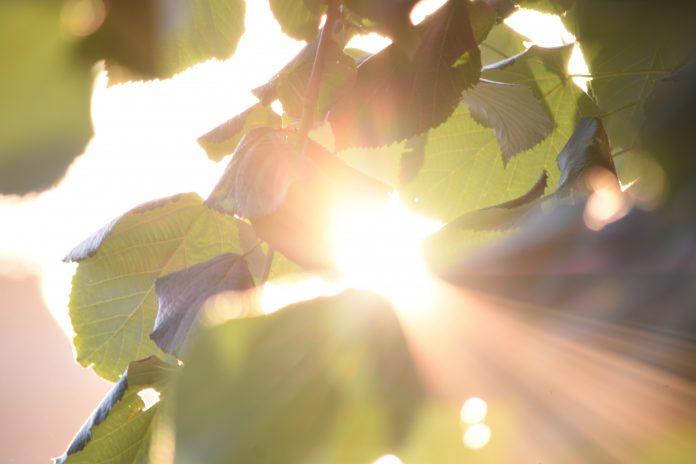 Warna kulit pengaruhi produksi vitamin D dalam tubuh
