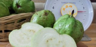 Taiwan's milk-based fertilizer makes guava crystal more delicious, nutritious
