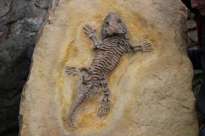 Fosil embrio kura-kura berusia 100 juta tahun ditemukan di China bagian tengah