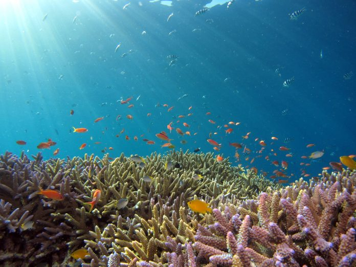 Ekosistem karang Basin Wetar dan Palung Timor bervariasi