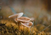 Penelitian: keanekaragaman mikroba penting untuk keseimbangan ekologis