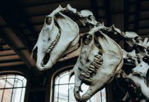 Ilmuwan temukan fosil dinosaurus tertua yang hidup dalam kawanan