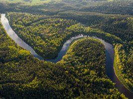 Facebook akan bertindak atas penjualan ilegal hutan hujan Amazon
