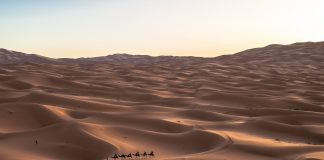 Arab Saudi tangkap 13.638 imigran ilegal dalam sepekan