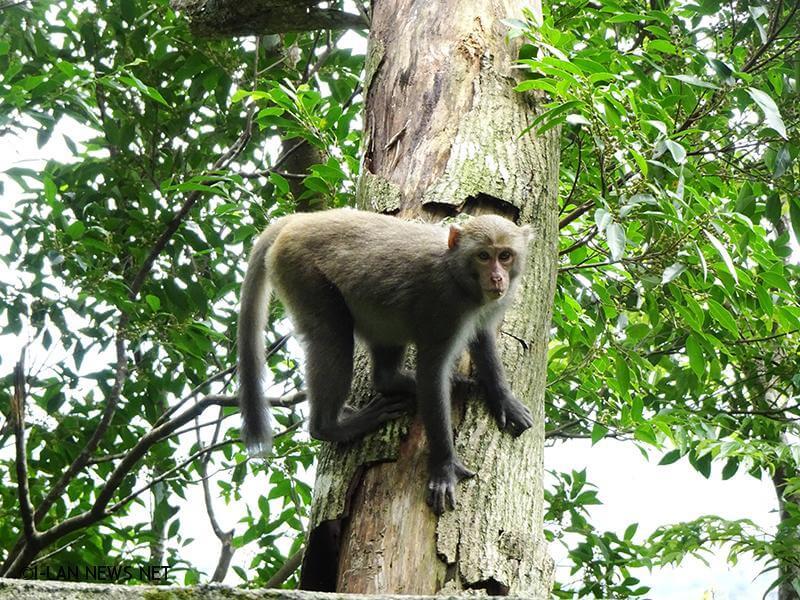 若在遊樂區內發現臺灣獼猴時,請記得保持距離,注意自己週遭安全