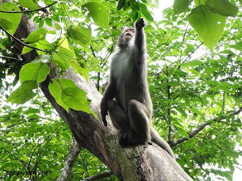 當遭遇臺灣獼猴時請務必遵守「不餵食」、「不接觸」、「不干擾」的三不原則