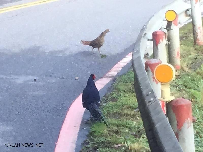 提醒用路人注意野生動物穿越道路,並減速慢行,期能減少野生動物路殺事件發生。