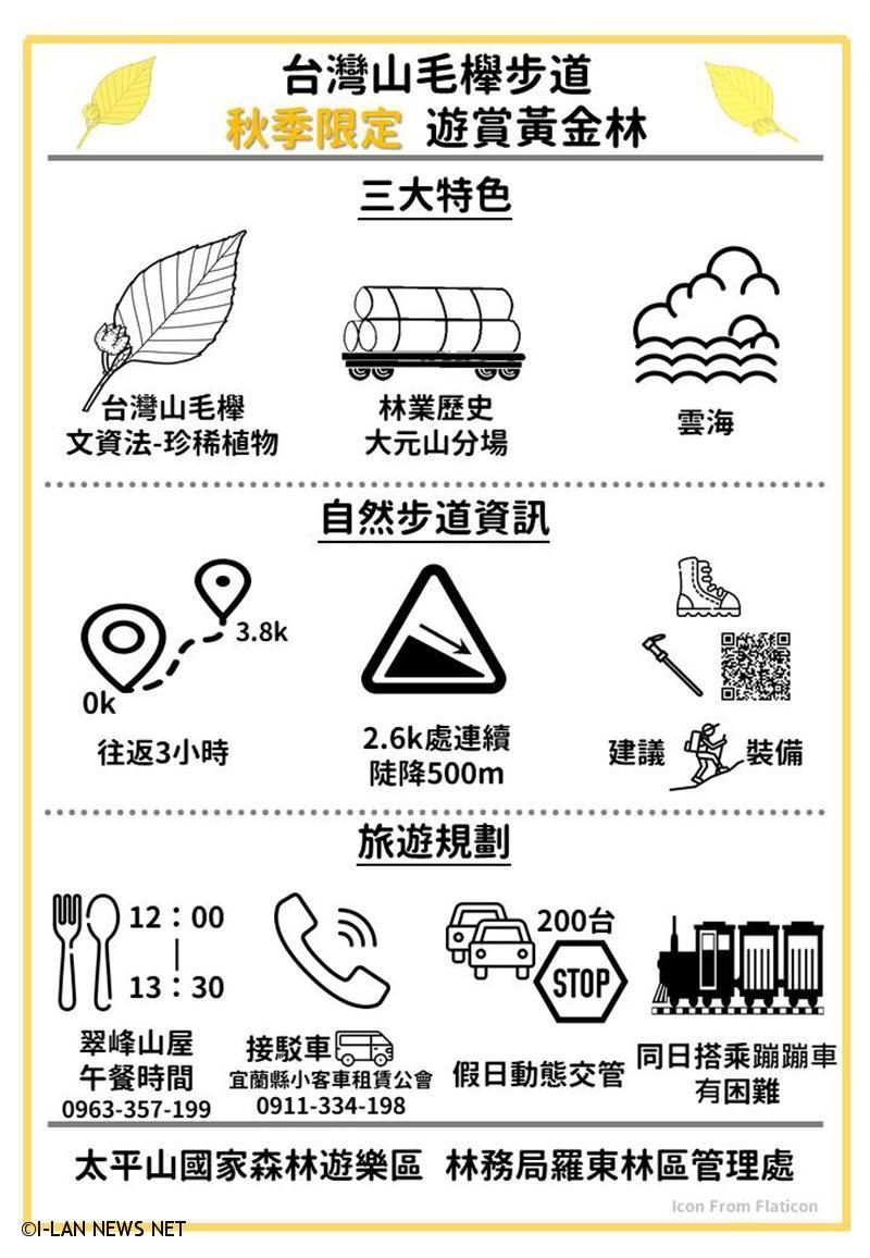 秋季限定「台灣山毛櫸步道」黃金林攻略。