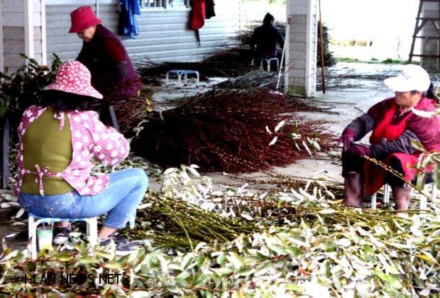 三星農會致贈5000顆青蔥水餃 為三星國中小棒球隊加油!